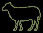 ovino-prodotti-bovinmarche
