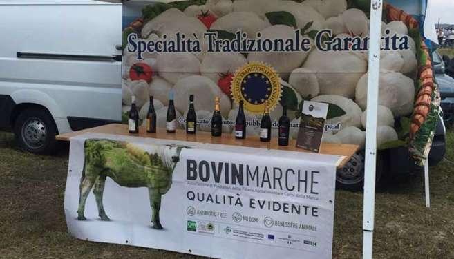 Bovinmarche-a-Risorgimarche-2