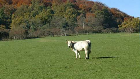 allevamenti-bovini-8