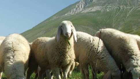 allevamento-ovini-2
