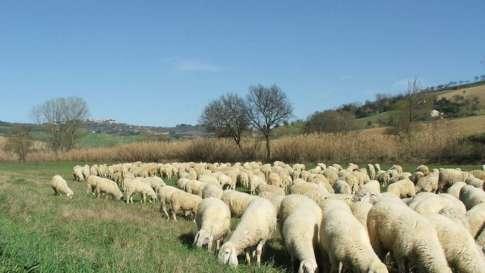 allevamento-ovini-5