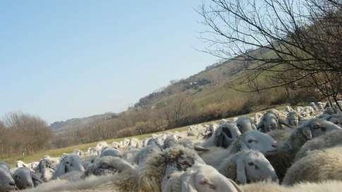 allevamento-ovini-7