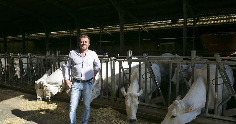 Gli allevatori Bovinmarche confermano Romanini presidente